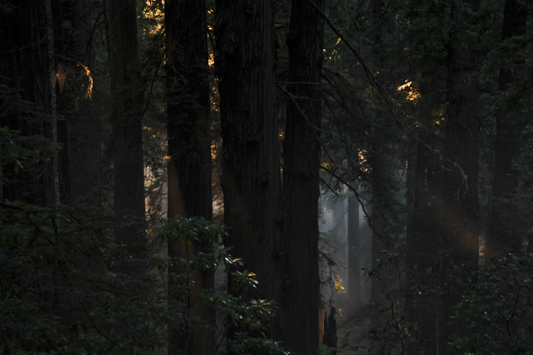Redwoods National Park, CA, United States Nikon D700 60mm - 1/20 - f/4,8 August 8th, 2010 07 : 51 PM